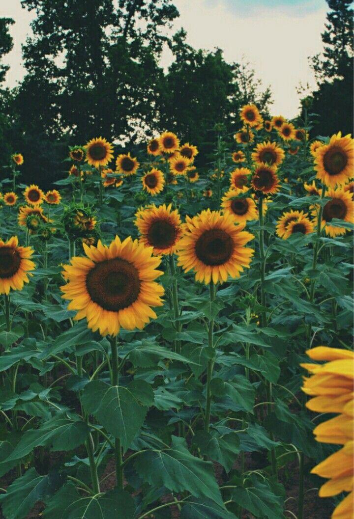 Epingle Par Len Sur Photos Pinterest Fleurs Belles Fleurs Et