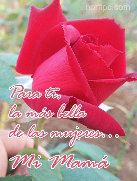 Frases Y Poemas Para Mamá Y Todas Las Madres De Facebook En Su Día Poemas Para Mama Versos Para Mama Frases Y Poemas