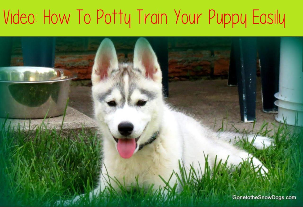 How To Potty Train Your Puppy Easily Potty Train Your Puppy