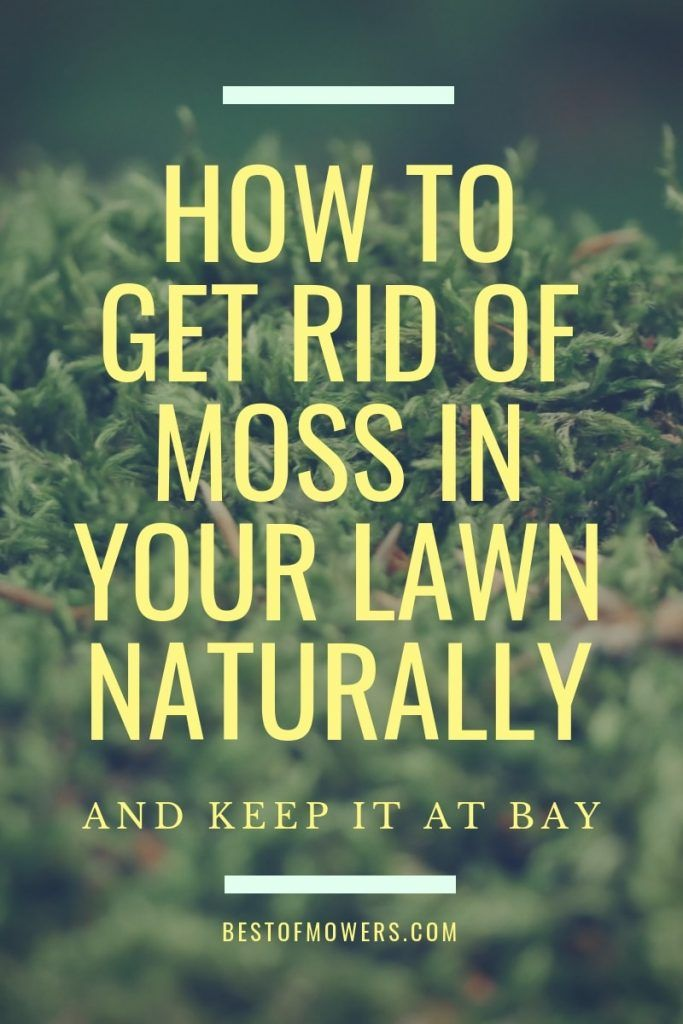 How To Get Rid Of Moss In Your Lawn Naturally