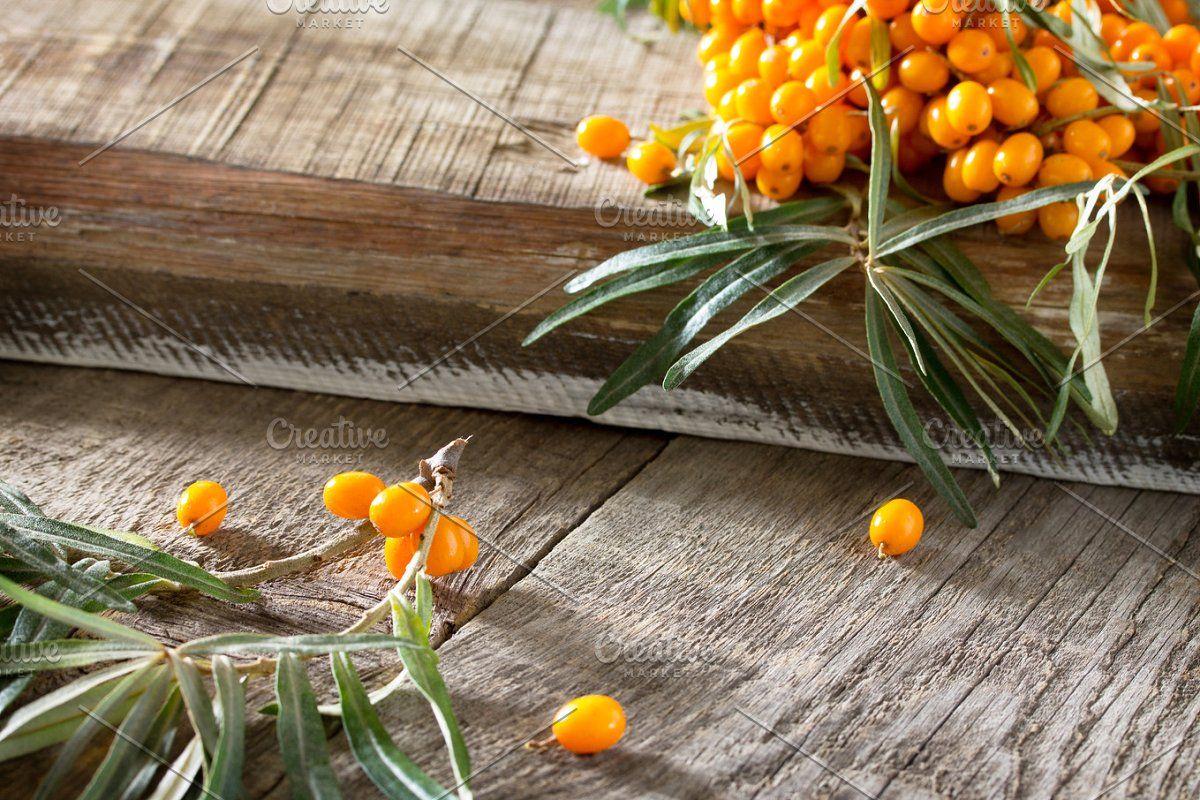 Seabuckthorn berries branch. #Sponsored , #sponsored, #branch#sea#Seabuckthorn#berries