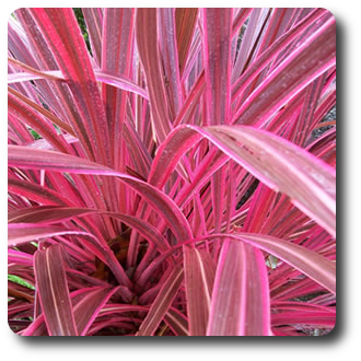 Pin By Gina Phillips On Water Friendly Gardens Plants Pink Plant Plant Zones