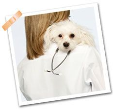 Emergency Pet Care With Images Dog Emergency Pet Care