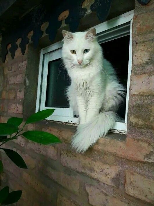 ️MonChatDoré ?? • • • • • #chat #monchat #passionchat #instachat #jaimemonchat #adorable #catlover #meow #kitten #… | Chat ...