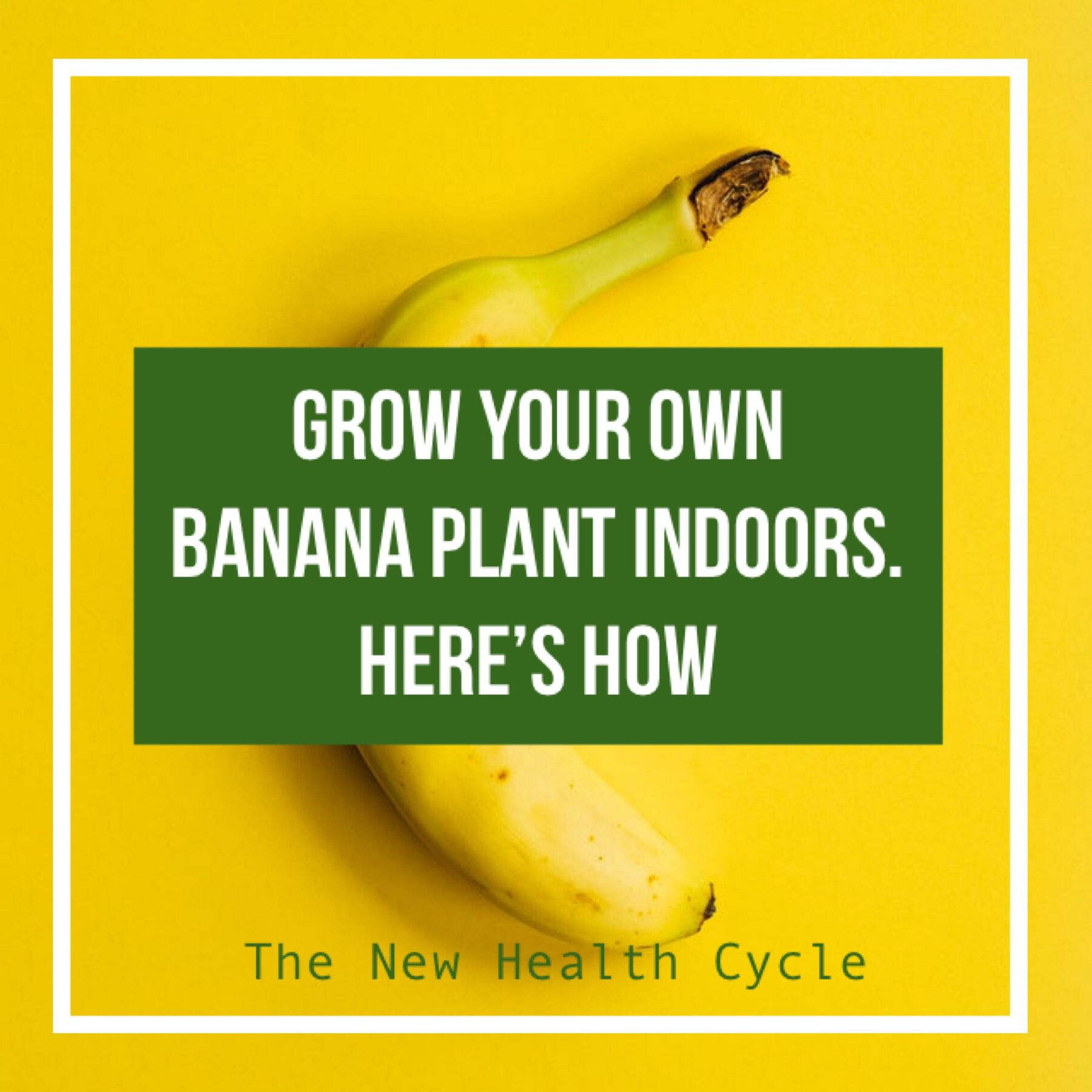 Grow your own banana plant indoors #howtogrowplants