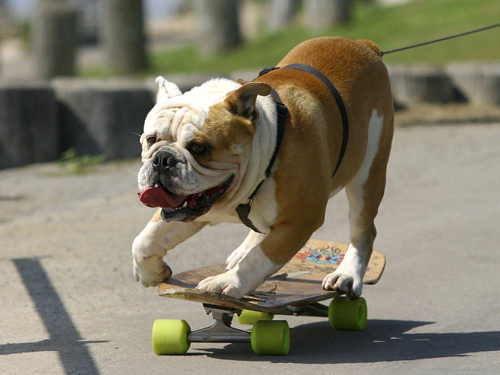 Look For Bulldogs On Natural Balance Rose Parade R Float Funny Animal Videos Bulldog Dog Poster