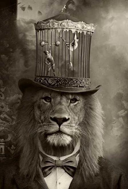 Dapper Fox Gets Nicked Downsizeme In 2020 Circus Art Animal Art Visual Artist