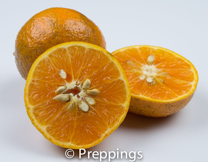 Honey Tangerine - Search by flavors, find similar varieties and discover new uses for ingredients @ preppings.com