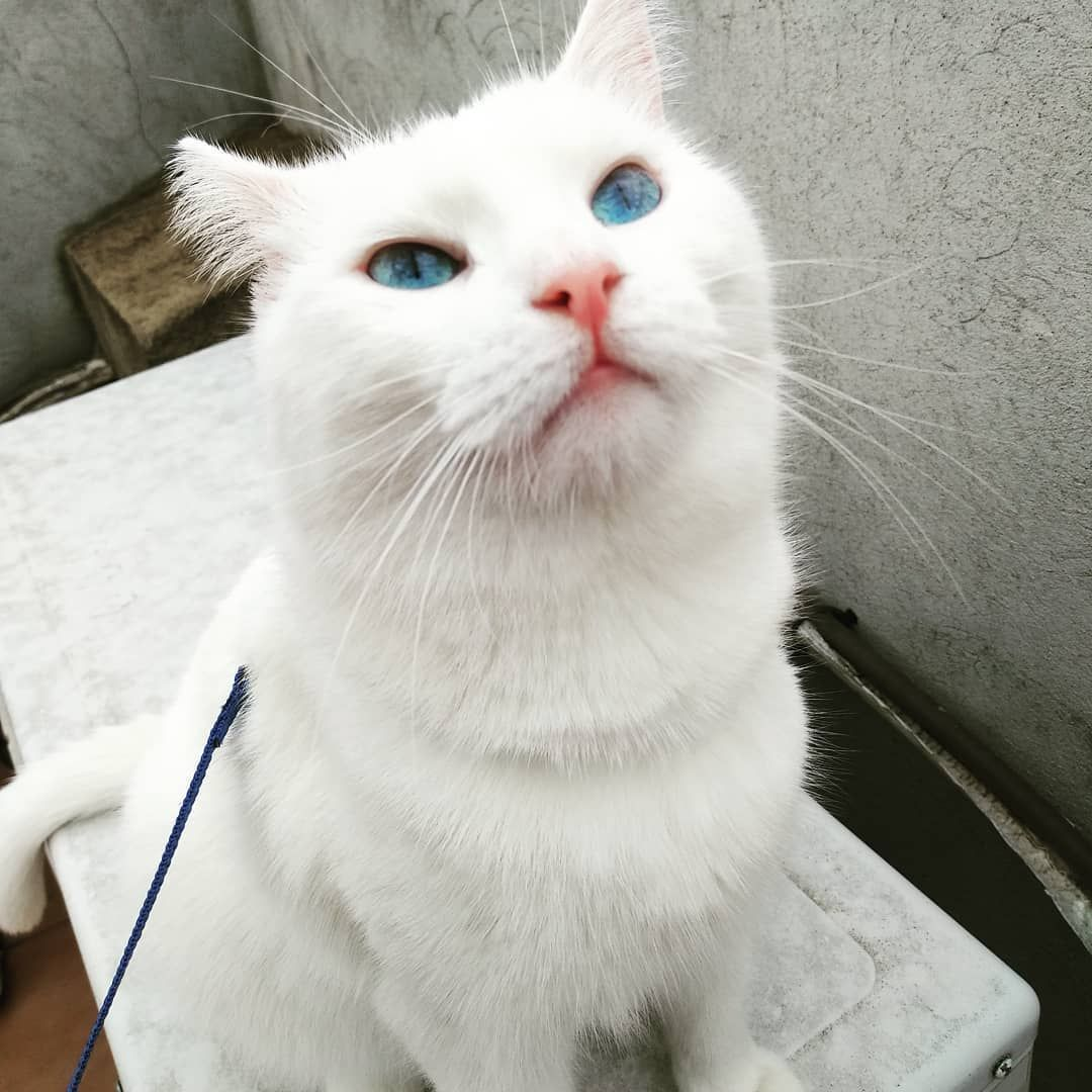 White Cats Deaf Eyes