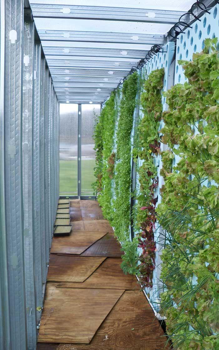 Alimentos orgânicos utilizam técnicas de cultivo que respeitam o meio ambiente e isto inclui a saúde daqueles que consomem este tipo de ali...