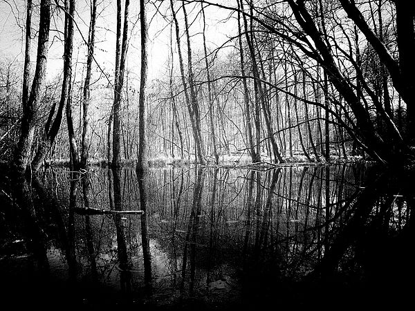 Black and white photography nature photography art for sale home decor wall