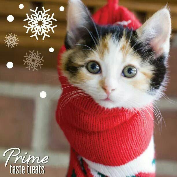 kitten stocking stuffer