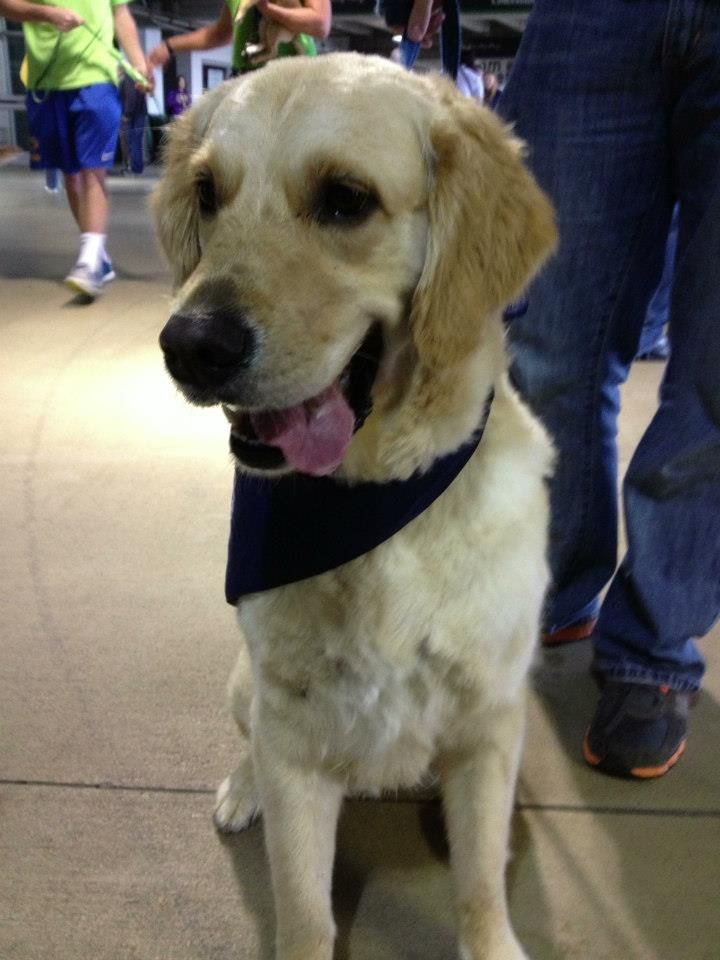 Cooper Is A Spunky Golden Retriever Who Has Just Had His Summer
