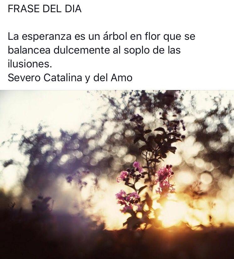 #citas #frases #frasesnaturaleza #frasedeldia #céspedsintetico #jardinería #paisajismo #gardening #landscape #artificialgrass #grass #padel #Valladolid  #flores #plantas #naturaleza #tenis #padel #tepe