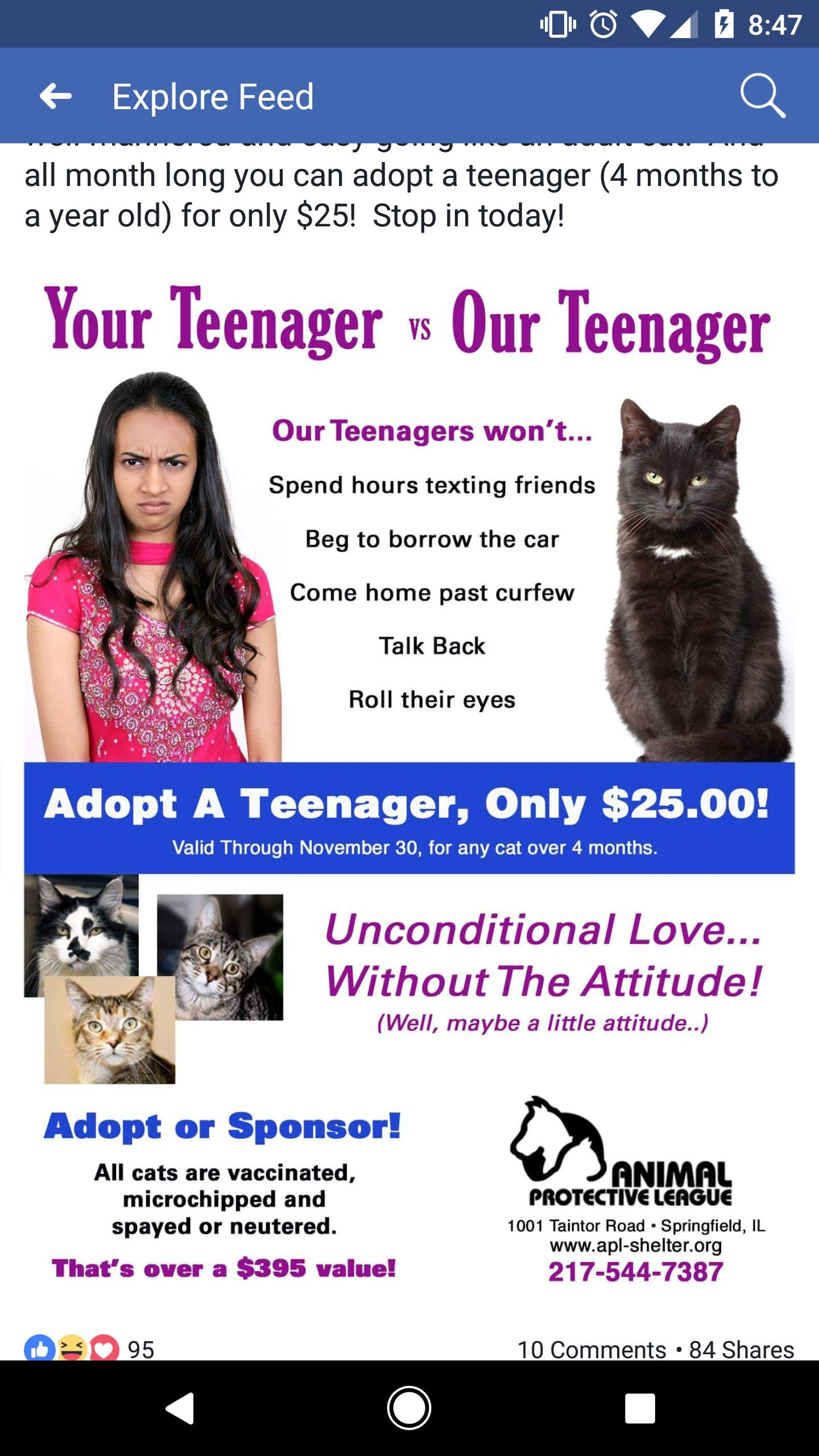Made Me Chuckle Http Ift Tt 2aqmrrp Animal Shelter Design Cat Adoption Clever Dog