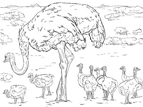 Ostrich with Chicks coloring page from Ostrich category. Select from ...