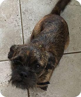 Hagerstown Md Cairn Terrier Dachshund Mix Meet Mia Etaa A