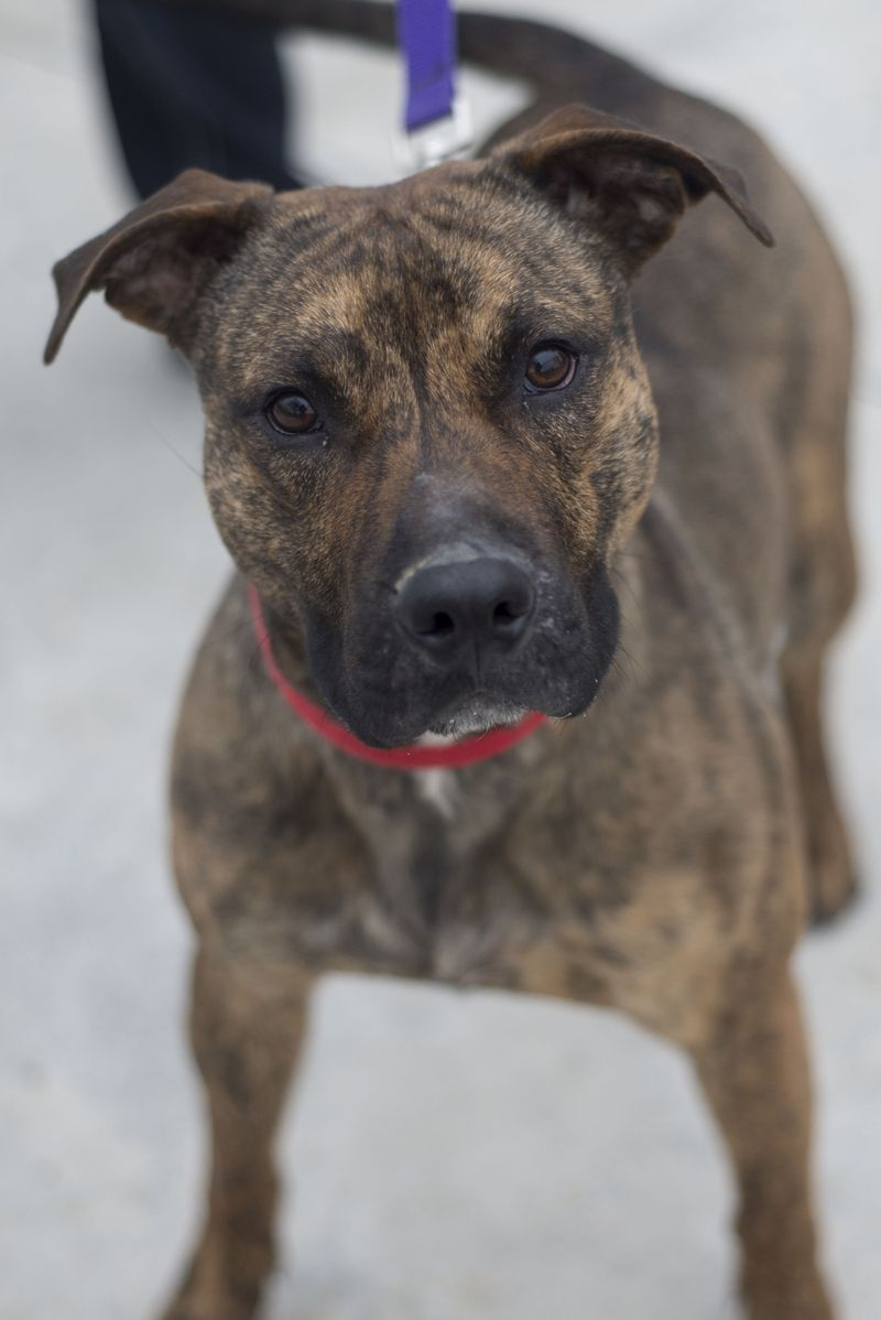 Adopt 08 Chet/Adopted on Adoption, Dog adoption, Dogs