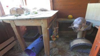 Inside of rabbits home with enrichment items © RSPCA Photolibrary