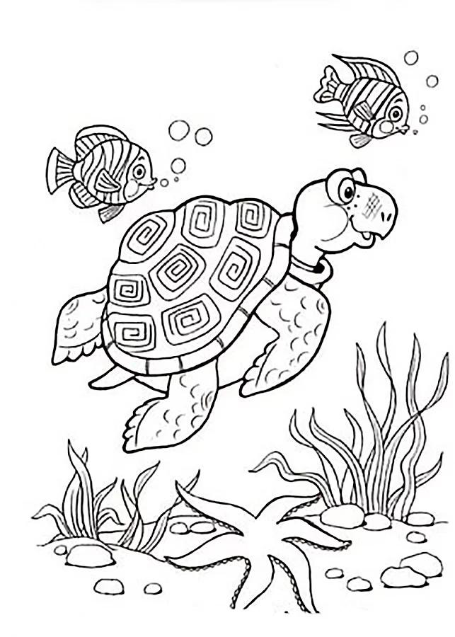 Раскраска водная черепаха - Раскраска Черепаха Скачать И ...