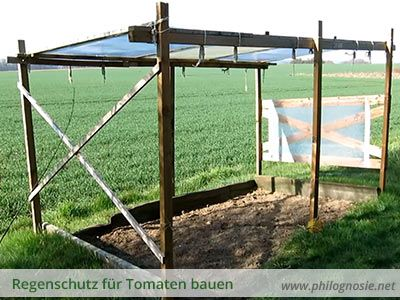 tomatendach regenschutz f r tomaten bauen tomaten. Black Bedroom Furniture Sets. Home Design Ideas