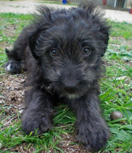 Border Collie Labradoodle Mix Dog Pictures Blog Dog Lovers Border Collie Mixed Breed