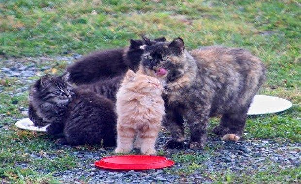 It Took A Man Months To Save Four Feral Kittens And Their Mama Feral Kittens Mama Cat Kittens