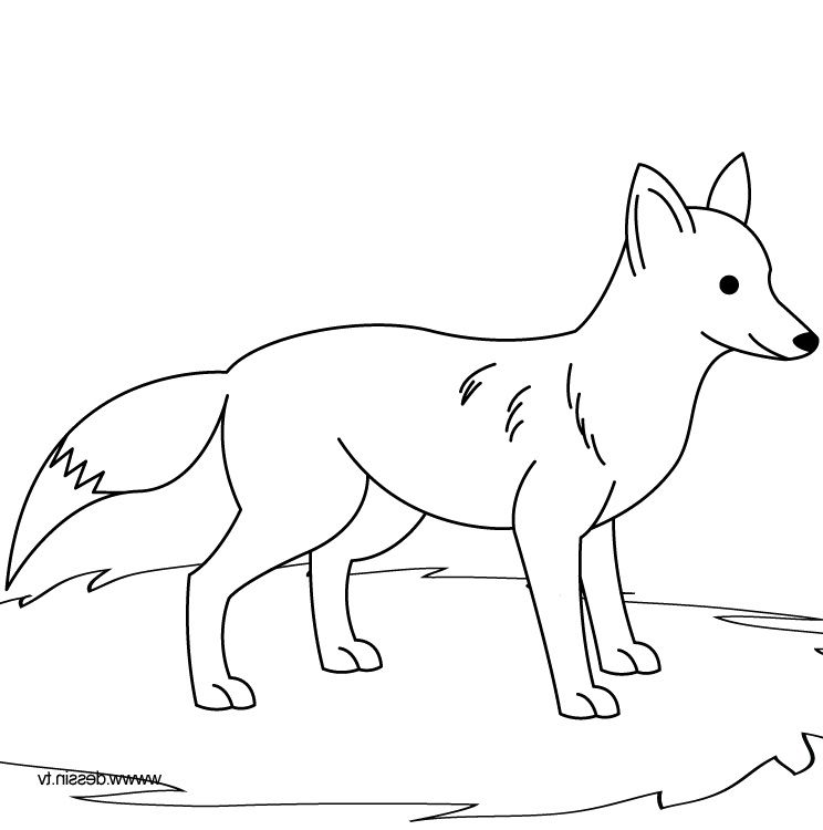 Photos Fox Coloring Pages