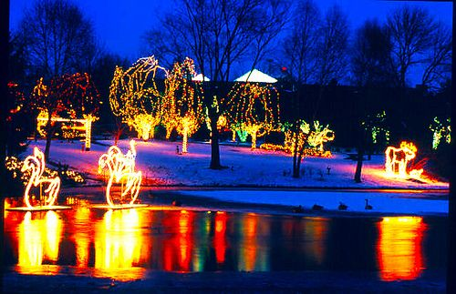 Holiday Lights In Columbus Fun Places To Go Columbus Zoo Places To Go