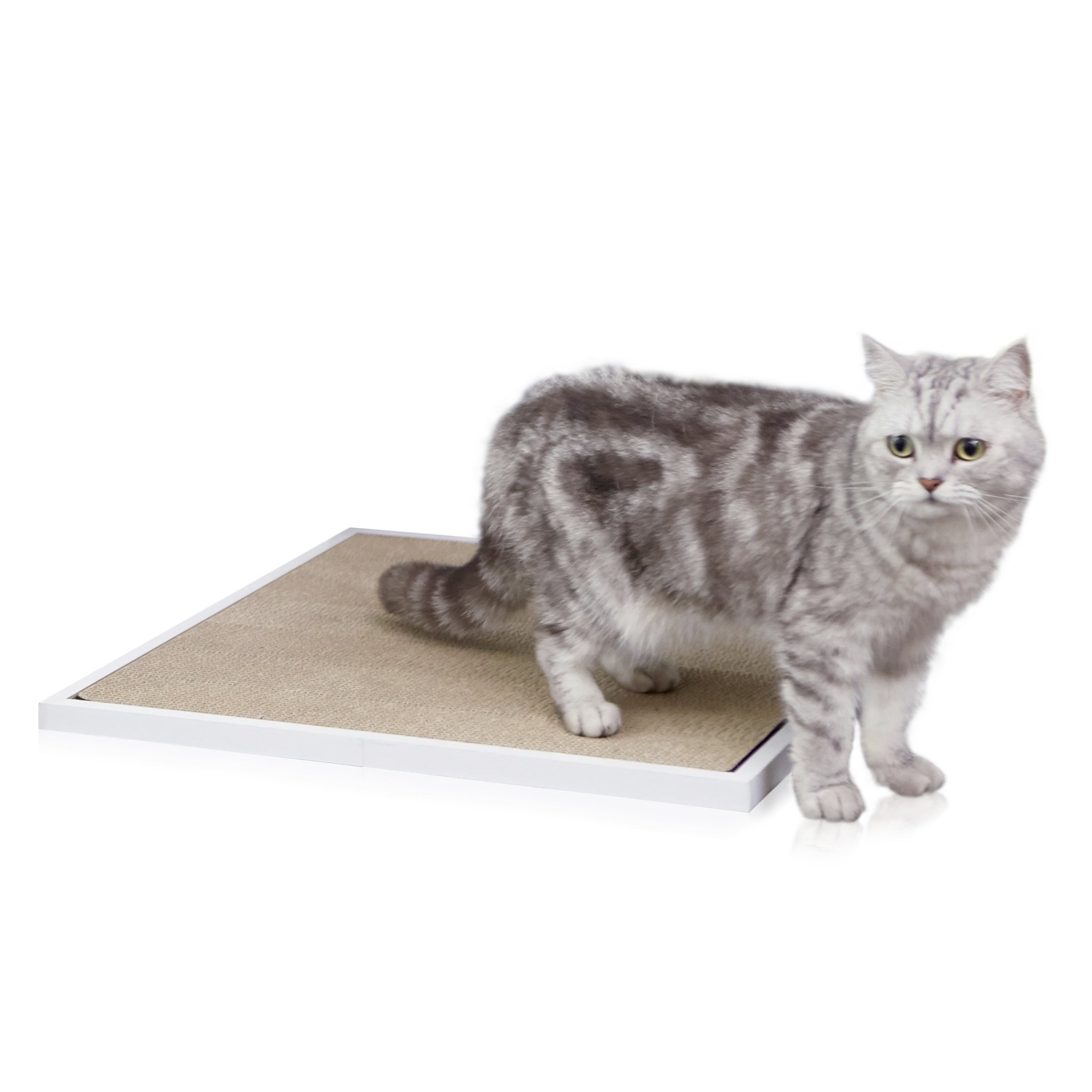 Way Basics EcoFriendly Cat Litter Box Enclosed Hidden Cat
