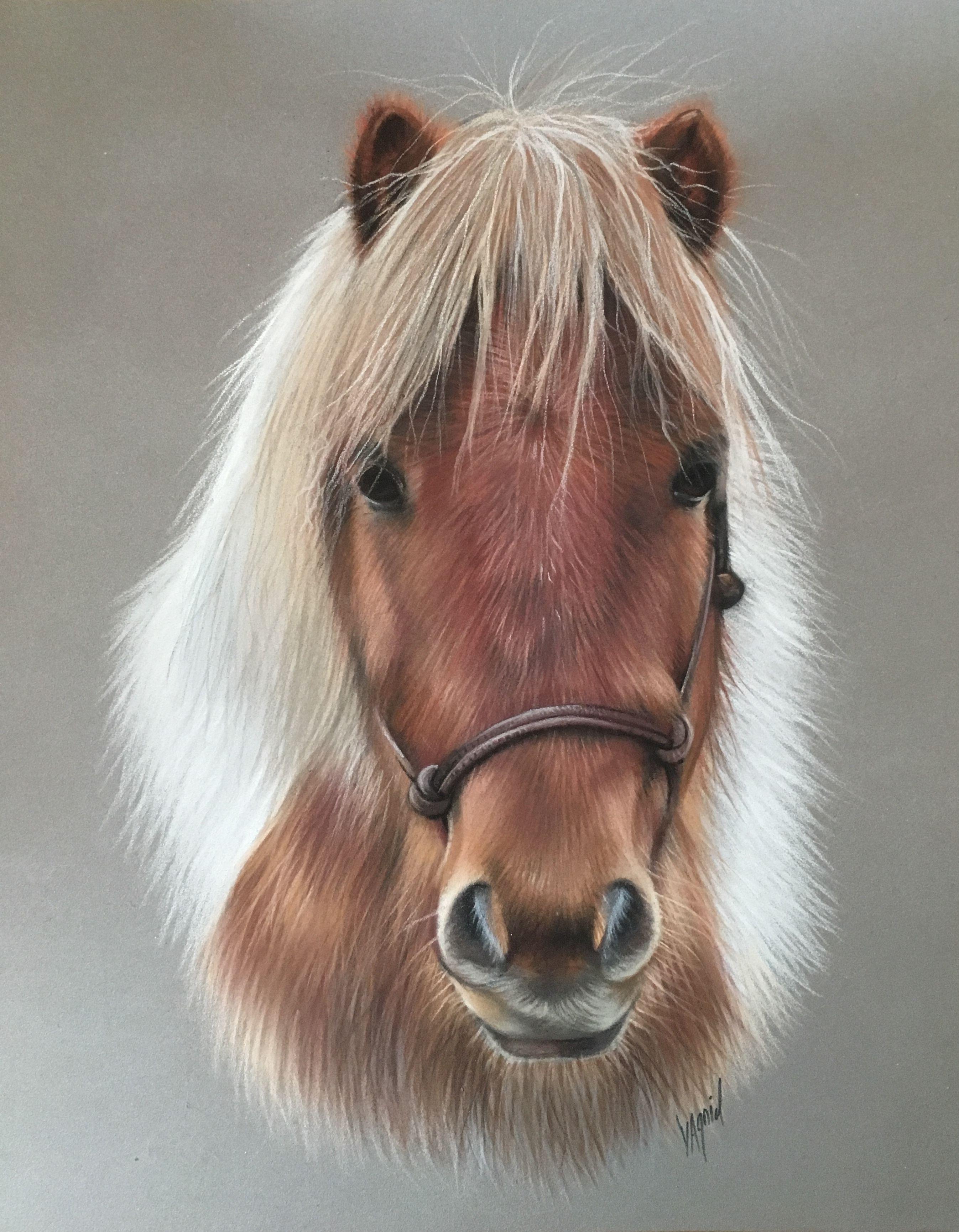 Poney Pastel Dessin De Poney Realise Au Pastel Poney Littlehorse Horse Horselove Animalpainting Animalartist Dessin Poney Dessin Cheval Peinture Cheval
