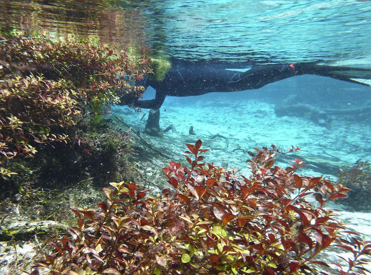 Blue Springs Park in High Springs, Florida   Florida