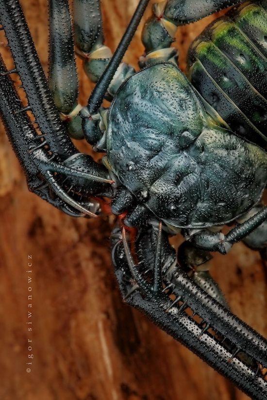 chladný-hmyz-14