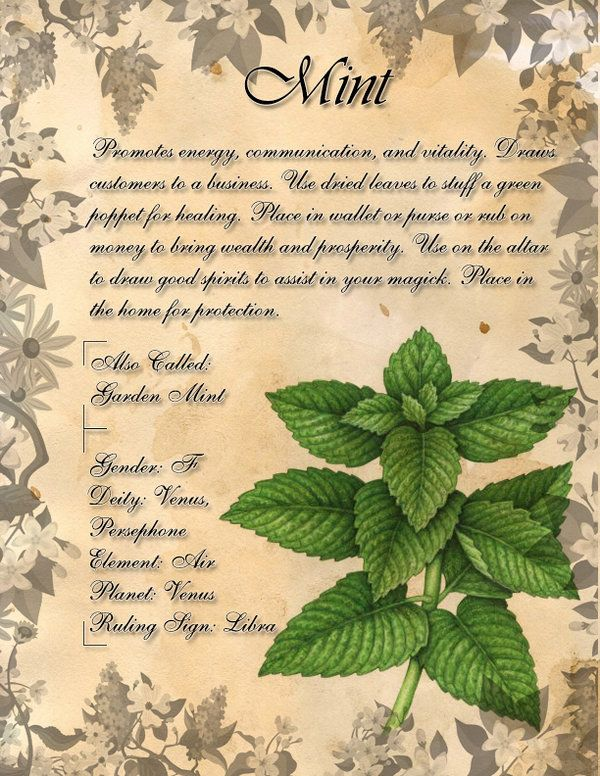Book of Shadows: Herb Grimoire- Mint by CoNiGMa on