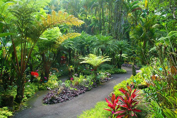 Historic Kailua Village Downtown Kailua Kona Is Home To Some Of The Most Important Sites Botanical Gardens Tropical Backyard Landscaping Landscaping With Rocks