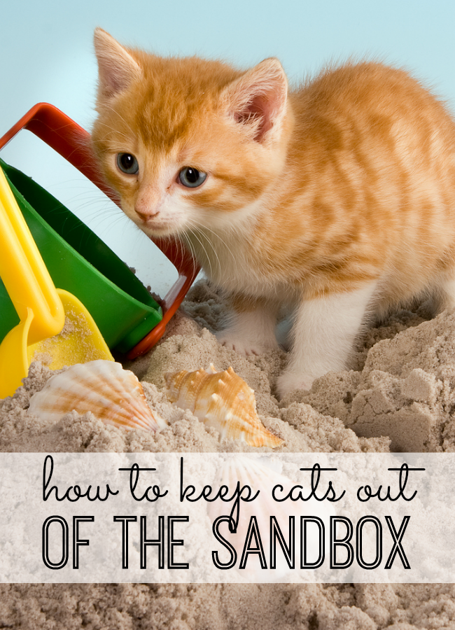 How to Keep the Cats Out of Your Sandbox Kids sandbox