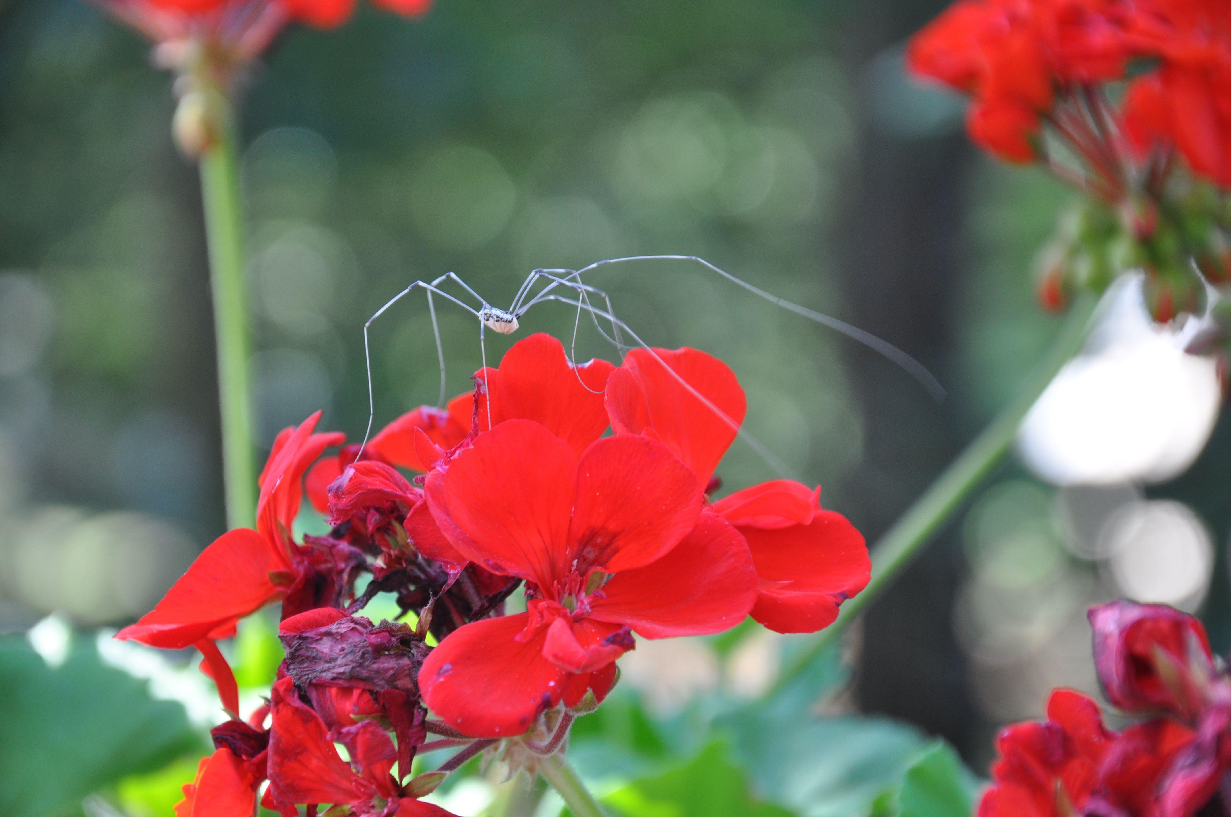 The Spider In The Backyard Cape Cod Backyard Spider