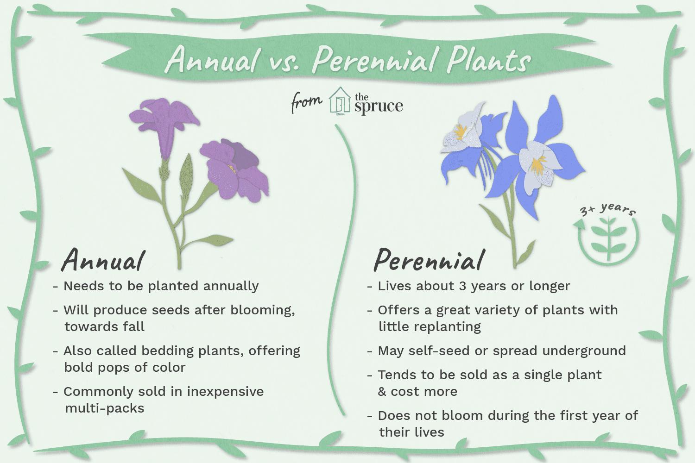 Define Annual Plant Google Search Annual Plants Annuals Vs Perennials Perennial Plants