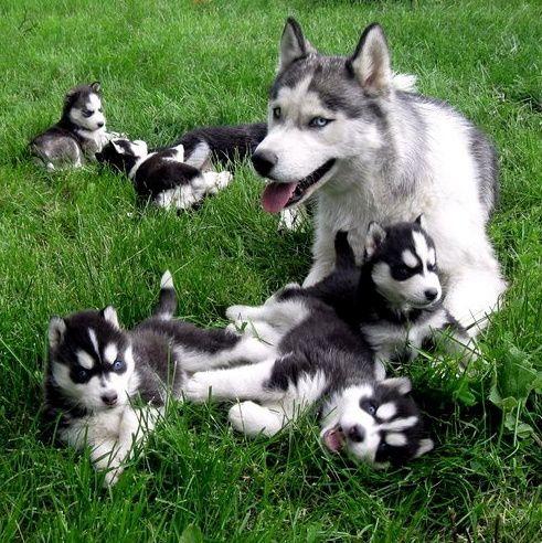 Holy Tired Mother Cute Animals Puppies Animals