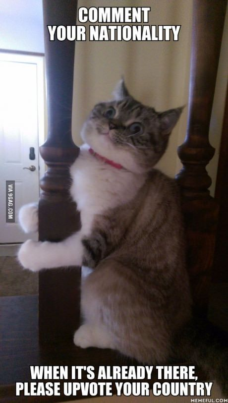 I M Interested Because They All Say That 9gag Is German Territory Funny Cat Pictures Funny Animals Cute Animals
