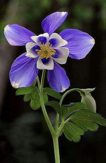 Pin On Natures Beauties