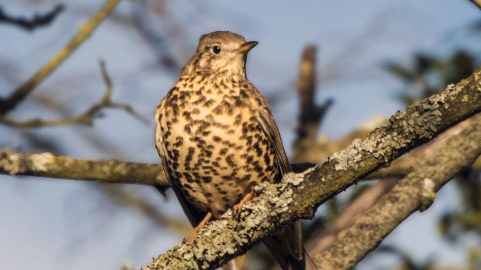 Birdwatching tips to identify birds bird song