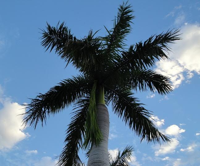 Palm Tree Palm Trees Garden Outdoor