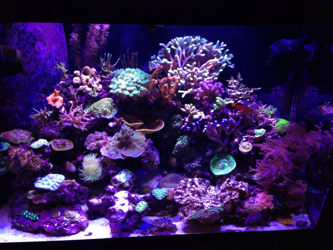 65 gallon reef tank fish tanks fish tank fish
