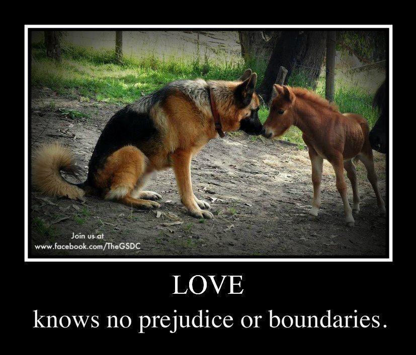 Via The German Shepherd Dog Community Facebook German Shepherd