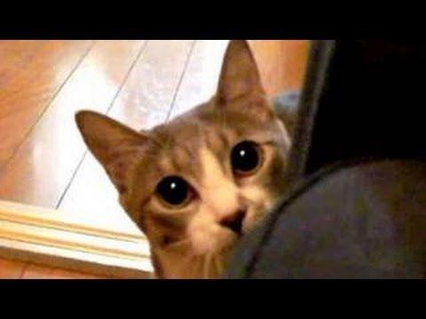 Funny Stalking Cat -- Funny Stalking Cats, Stalking Kitten - YouTube