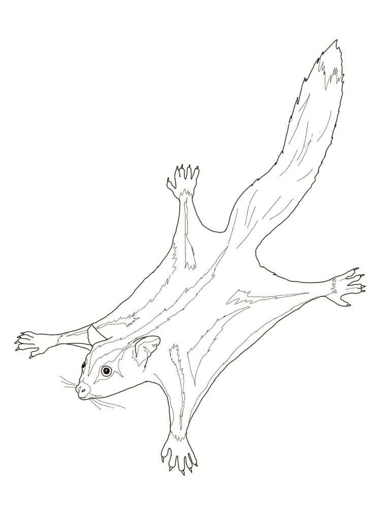 Possum Coloring Pages Print Sugar Glider Coloring Pages Animal