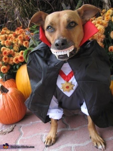 Pin On Halloween Animals