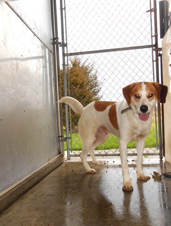 Adopt Bowie On Dog Names Male Dog Adoption Adoption