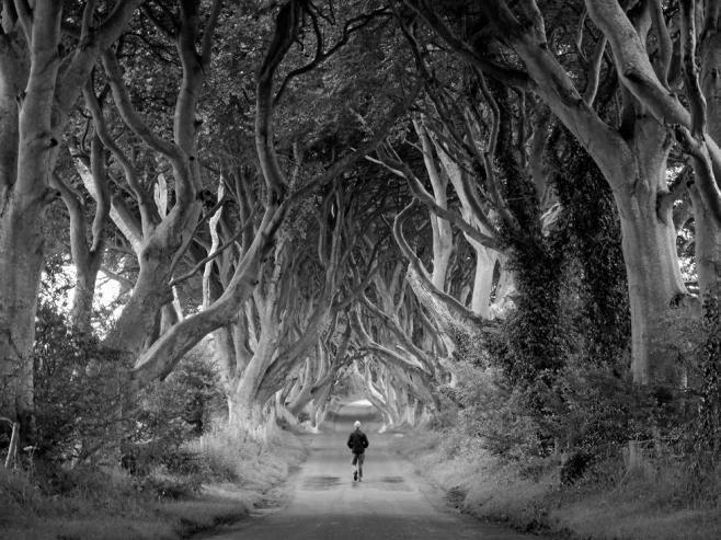 Dark Hedges North Ireland